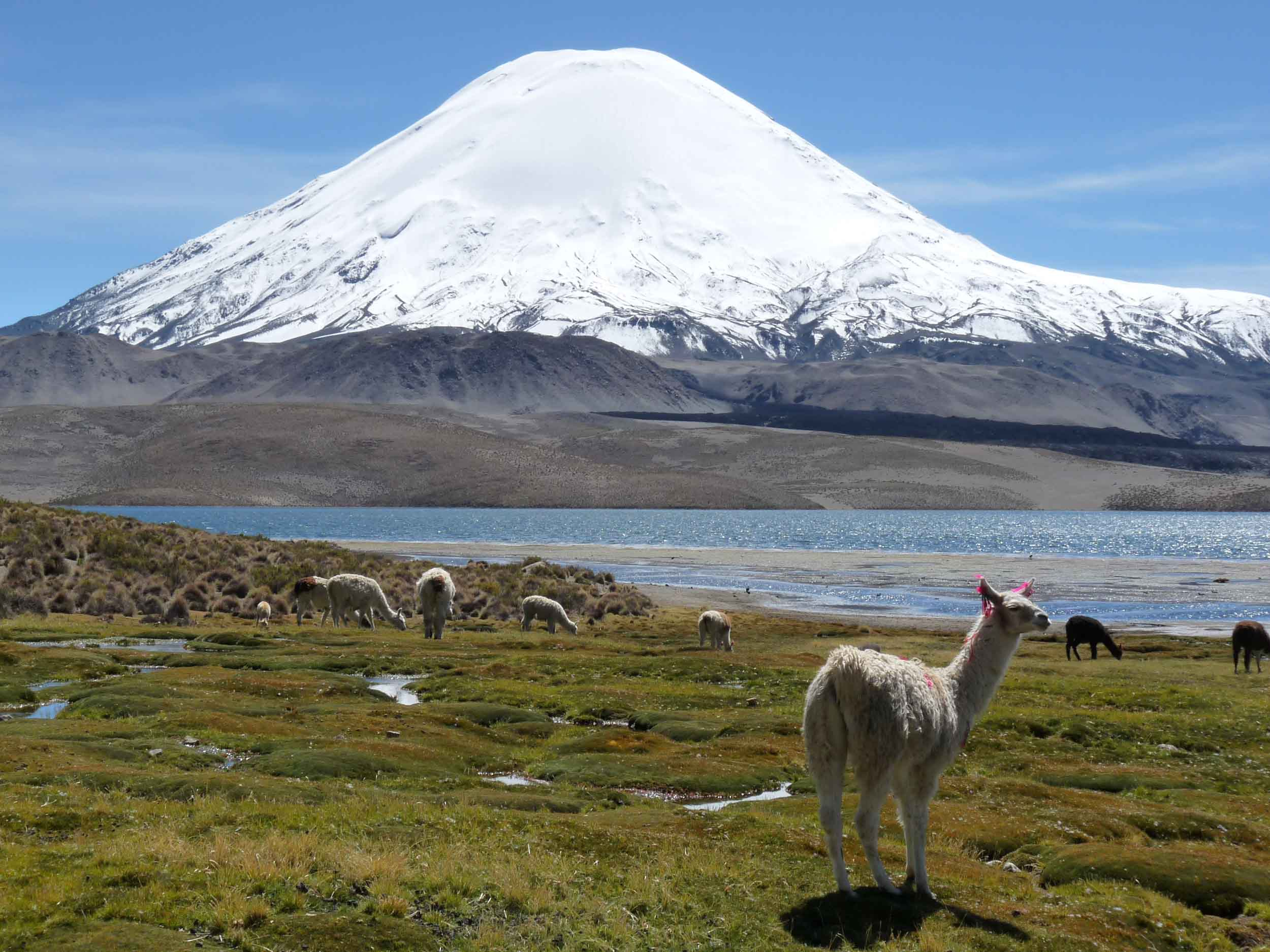 The Best Of The Altiplano ( Highlands)