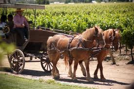 Central Valley And Wine Route Tour