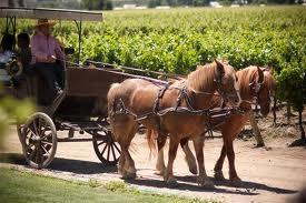 Central Valley And Wine Route Tour Packages